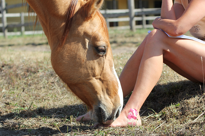 Horse sniffing feet